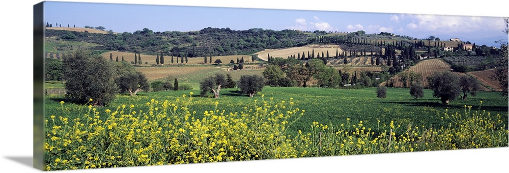 Solid-Faced Canvas Print Wall Art entitled Flowers in a field, San Antimo,