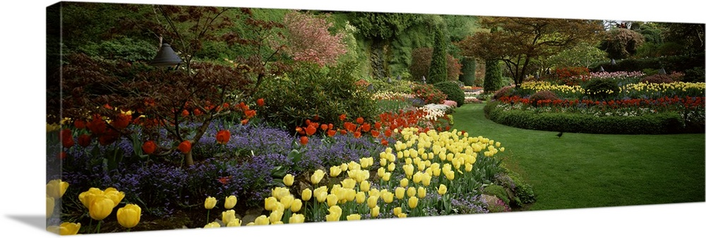 Large Solid-Faced Canvas Print Wall Art Print 48 x 16 entitled Flowers in a garden, Butchart Gardens, Brentwood Bay, Vanco... Solid-Faced Canvas Print entitled Flowers in a garden, Butchart Gardens, Brentwood Bay, Vancouver Island, British Columbia, Canada.  Multiple sizes available.  Primary colors within this image include Dark Red, Dark Yellow, Forest Green, Black.  Made in USA.  All products come with a 365 day workmanship guarantee.  Archival-quality UV-resistant inks.  Canvas depth is 1.25 and includes a finished backing with pre-installed hanging hardware.  Canvas is handcrafted and made-to-order in the United States using high quality artist-grade canvas.
