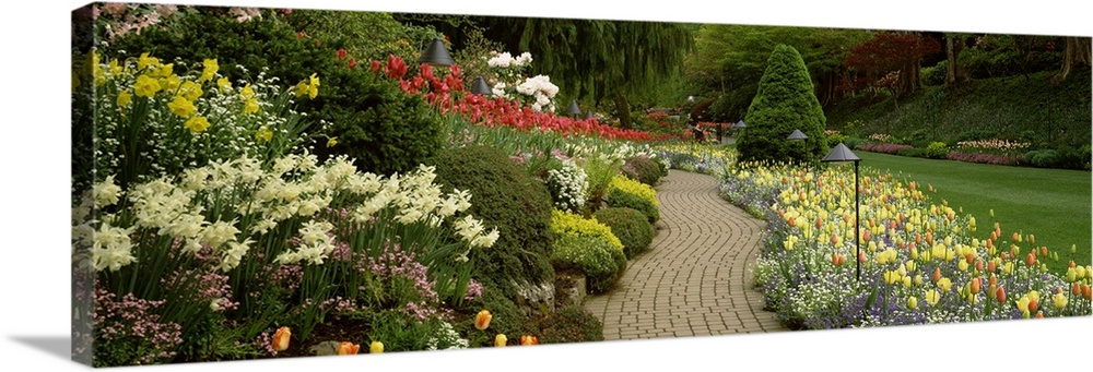 Large Solid-Faced Canvas Print Wall Art Print 48 x 16 entitled Flowers in a garden, Butchart Gardens, Brentwood Bay, Vanco... Solid-Faced Canvas Print entitled Flowers in a garden, Butchart Gardens, Brentwood Bay, Vancouver Island, British Columbia, Canada.  Giant, landscape photograph of a brick path leading through vibrant flowers and shrubs, in Butchart Gardens at Brentwood Bay on Vancouver Island, British Columbia, Canada.  Multiple sizes available.  Primary colors within this image include Brown, Dark Yellow, Black, Light Gray.  Made in the USA.  Satisfaction guaranteed.  Archival-quality UV-resistant inks.  Canvas depth is 1.25 and includes a finished backing with pre-installed hanging hardware.  Archival inks prevent fading and preserve as much fine detail as possible with no over-saturation or color shifting.
