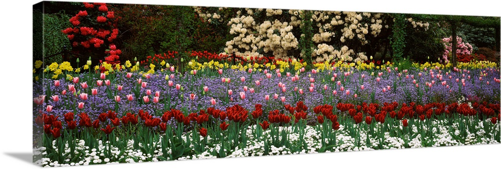 Large Solid-Faced Canvas Print Wall Art Print 48 x 16 entitled Flowers in a garden, Butchart Gardens, Brentwood Bay, Vanco... Solid-Faced Canvas Print entitled Flowers in a garden, Butchart Gardens, Brentwood Bay, Vancouver Island, British Columbia, Canada.  Multiple sizes available.  Primary colors within this image include Dark Red, Dark Yellow, Forest Green, Black.  Made in the USA.  All products come with a 365 day workmanship guarantee.  Archival-quality UV-resistant inks.  Canvas depth is 1.25 and includes a finished backing with pre-installed hanging hardware.  Canvas is handcrafted and made-to-order in the United States using high quality artist-grade canvas.
