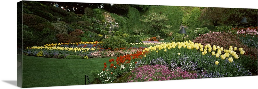 Large Solid-Faced Canvas Print Wall Art Print 48 x 16 entitled Flowers in a garden, Butchart Gardens, Brentwood Bay, Vanco... Solid-Faced Canvas Print entitled Flowers in a garden, Butchart Gardens, Brentwood Bay, Vancouver Island, British Columbia, Canada.  Multiple sizes available.  Primary colors within this image include Brown, Light Yellow, Black, Dark Forest Green.  Made in USA.  All products come with a 365 day workmanship guarantee.  Archival-quality UV-resistant inks.  Featuring a proprietary design, our canvases produce the tightest corners without any bubbles, ripples, or bumps and will not warp or sag over time.  Canvas depth is 1.25 and includes a finished backing with pre-installed hanging hardware.
