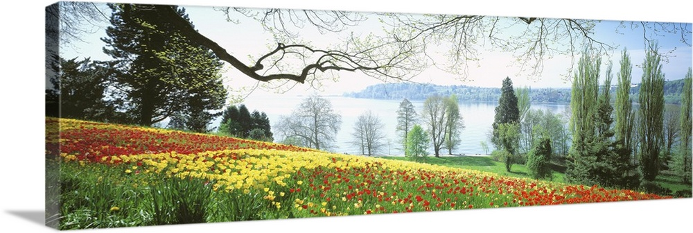Large Solid-Faced Canvas Print Wall Art Print 48 x 16 entitled Garden Island of Mainau Lake Constance Germany Solid-Faced Canvas Print entitled Garden Island of Mainau Lake Constance Germany.  A field of flowers is photographed in the foreground with a large body of water shown in the distance.  Multiple sizes available.  Primary colors within this image include Dark Red, Peach, White, Dark Forest Green.  Made in USA.  All products come with a 365 day workmanship guarantee.  Inks used are latex-based and designed to last.  Canvas is handcrafted and made-to-order in the United States using high quality artist-grade canvas.  Canvas depth is 1.25 and includes a finished backing with pre-installed hanging hardware.