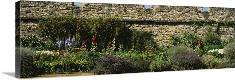 Large Solid-Faced Canvas Print Wall Art Print 48 x 16 entitled Garden near a stone wall, Oxford, England Solid-Faced Canvas Print entitled Garden near a stone wall, Oxford, England.  Multiple sizes available.  Primary colors within this image include Light Gray, Dark Forest Green.  Made in USA.  Satisfaction guaranteed.  Inks used are latex-based and designed to last.  Canvas depth is 1.25 and includes a finished backing with pre-installed hanging hardware.  Canvas is handcrafted and made-to-order in the United States using high quality artist-grade canvas.