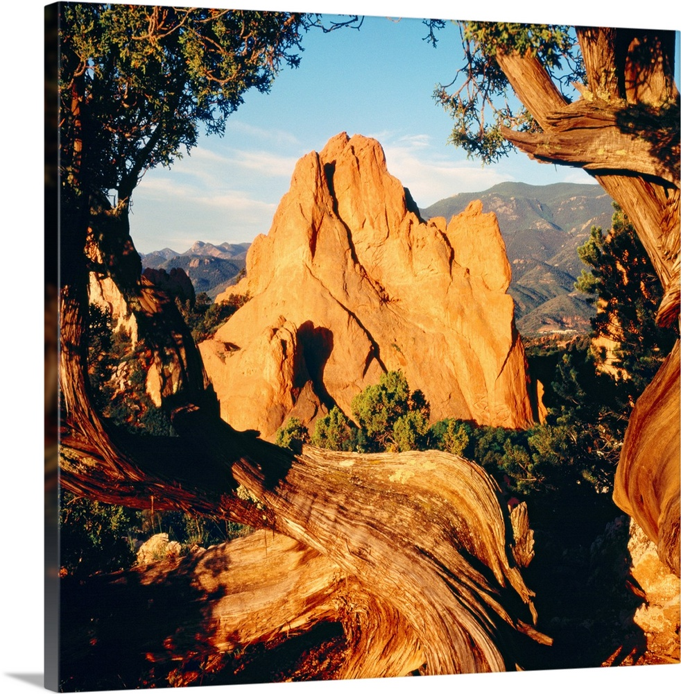Large Solid-Faced Canvas Print Wall Art Print 20 x 20 entitled Garden of the Gods CO Solid-Faced Canvas Print entitled Garden of the Gods CO.  Dry, wind battered trees frame the edges of this landscape photograph of natural rock formations in the desert.  Multiple sizes available.  Primary colors within this image include Dark Red, Peach, Black, Light Gray Blue.  Made in USA.  Satisfaction guaranteed.  Inks used are latex-based and designed to last.  Archival inks prevent fading and preserve as much fine detail as possible with no over-saturation or color shifting.  Featuring a proprietary design, our canvases produce the tightest corners without any bubbles, ripples, or bumps and will not warp or sag over time.