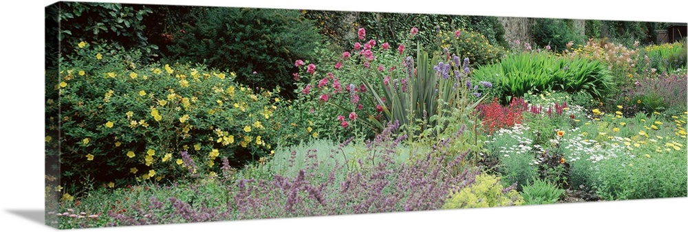 Large Solid-Faced Canvas Print Wall Art Print 48 x 16 entitled Herbaceous plants, Bodnant Gardens, Clwyd, Wales Solid-Faced Canvas Print entitled Herbaceous plants, Bodnant Gardens, Clwyd, Wales.  Multiple sizes available.  Primary colors within this image include Forest Green, Light Yellow, Black, Light Gray.  Made in the USA.  All products come with a 365 day workmanship guarantee.  Inks used are latex-based and designed to last.  Featuring a proprietary design, our canvases produce the tightest corners without any bubbles, ripples, or bumps and will not warp or sag over time.  Archival inks prevent fading and preserve as much fine detail as possible with no over-saturation or color shifting.