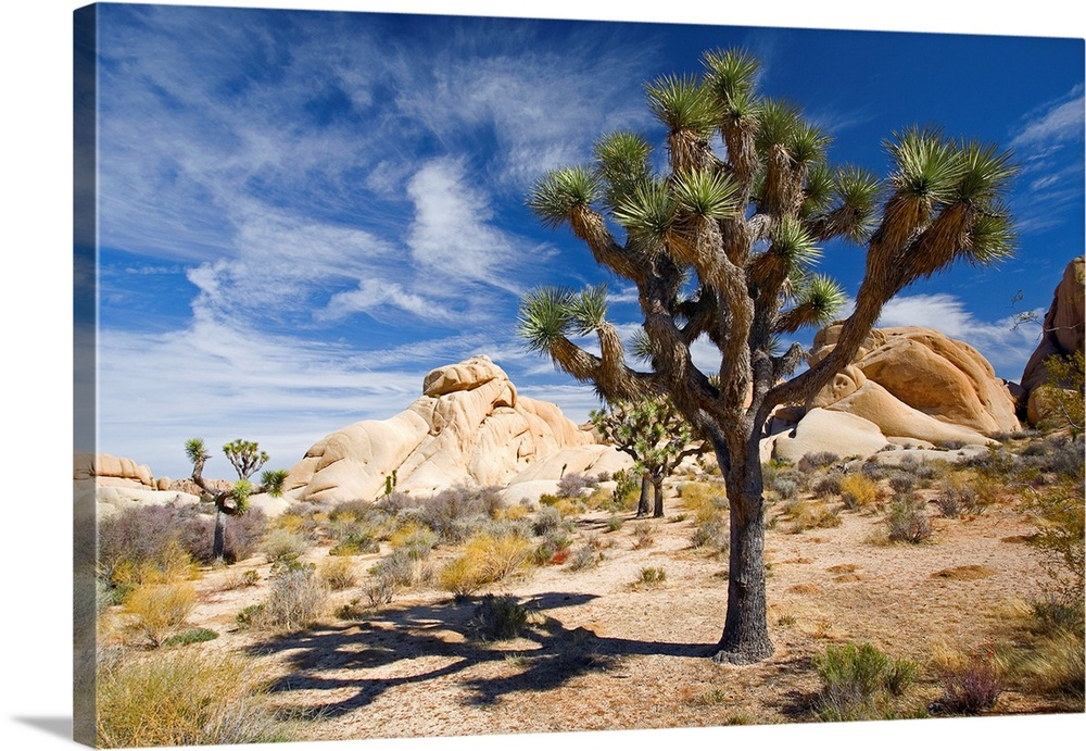 Large Solid-Faced Canvas Print Wall Art Print 30 x 20 entitled Joshua Tree With Shadow Solid-Faced Canvas Print entitled Joshua Tree With Shadow.  Large photograph emphasizes a lone tree sitting within a desert landscape of California.  Surrounding the tree are small patches of grass and a set of giant rock formations can be seen in the near distance.  Multiple sizes available.  Primary colors within this image include Brown, White, Muted Blue, Light Gray Blue.  Made in USA.  Satisfaction guaranteed.  Inks used are latex-based and designed to last.  Canvas is handcrafted and made-to-order in the United States using high quality artist-grade canvas.  Canvas depth is 1.25 and includes a finished backing with pre-installed hanging hardware.