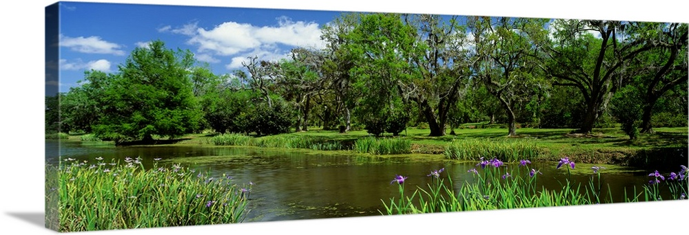 Large Solid-Faced Canvas Print Wall Art Print 48 x 16 entitled Jungle Gardens Avery Island Southern LA Solid-Faced Canvas Print entitled Jungle Gardens Avery Island Southern LA.  Multiple sizes available.  Primary colors within this image include Forest Green, Black, Gray, Royal Blue.  Made in USA.  Satisfaction guaranteed.  Archival-quality UV-resistant inks.  Featuring a proprietary design, our canvases produce the tightest corners without any bubbles, ripples, or bumps and will not warp or sag over time.  Canvas is handcrafted and made-to-order in the United States using high quality artist-grade canvas.