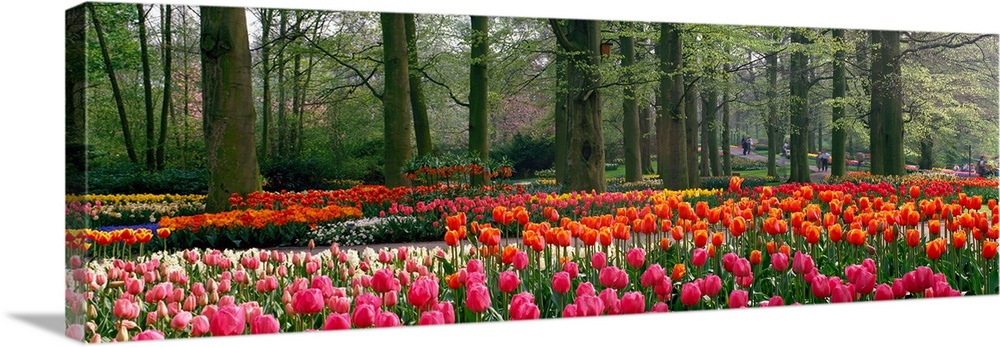 Large Solid-Faced Canvas Print Wall Art Print 48 x 16 entitled Keukenhof Garden Lisse The Netherlands Solid-Faced Canvas Print entitled Keukenhof Garden Lisse The Netherlands.  Panoramic photograph of tulips with landscaped trees in the background.  Multiple sizes available.  Primary colors within this image include Red, Orange, Forest Green, White.  Made in the USA.  Satisfaction guaranteed.  Inks used are latex-based and designed to last.  Archival inks prevent fading and preserve as much fine detail as possible with no over-saturation or color shifting.  Canvas depth is 1.25 and includes a finished backing with pre-installed hanging hardware.
