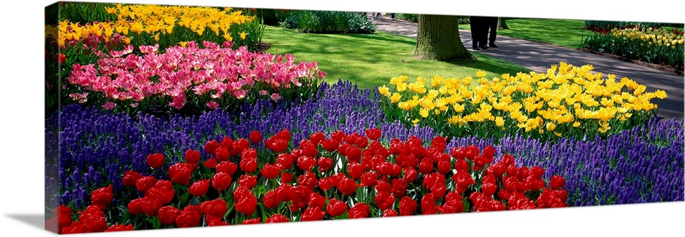 Large Solid-Faced Canvas Print Wall Art Print 48 x 16 entitled Keukenhof Garden Lisse The Netherlands Solid-Faced Canvas Print entitled Keukenhof Garden Lisse The Netherlands.  Panoramic photograph displays various groups of vibrantly colored flowers as they sit near the edge of a walking path in Western Europe.  Multiple sizes available.  Primary colors within this image include Yellow, Dark Red, Dark Blue, Black.  Made in USA.  All products come with a 365 day workmanship guarantee.  Archival-quality UV-resistant inks.  Canvas depth is 1.25 and includes a finished backing with pre-installed hanging hardware.  Canvas is handcrafted and made-to-order in the United States using high quality artist-grade canvas.