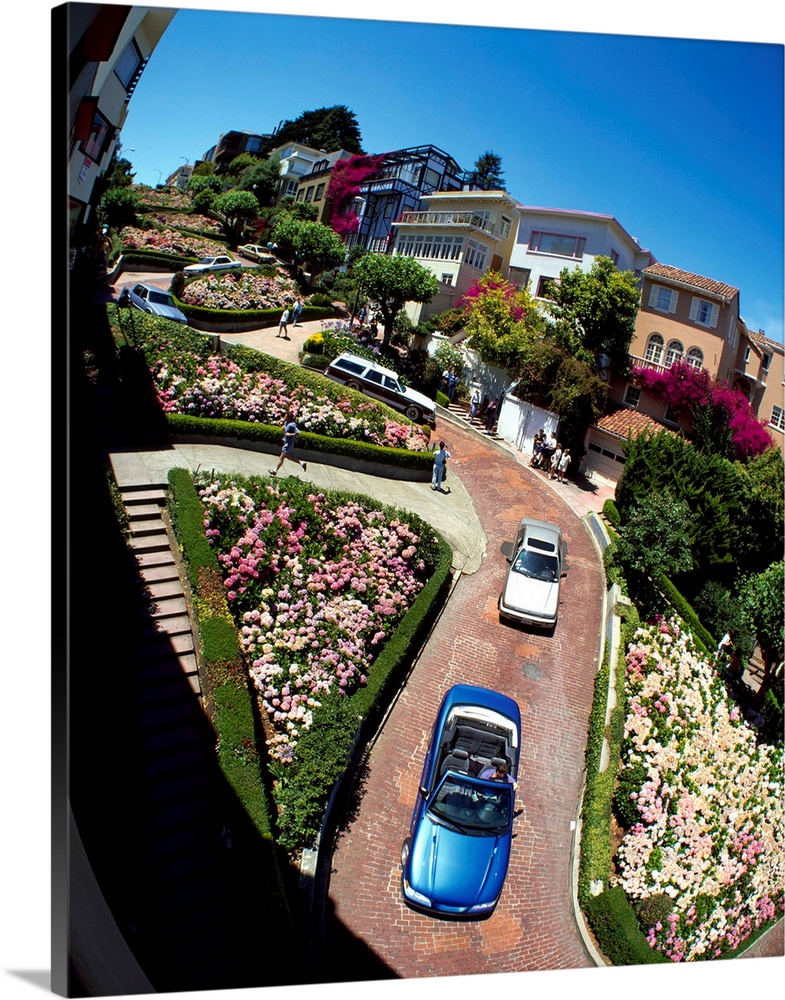Large Solid-Faced Canvas Print Wall Art Print 24 x 30 entitled Lombard Street San Francisco CA Solid-Faced Canvas Print entitled Lombard Street San Francisco CA.  Low-angle view of brick paved roadway winding through hills covered in flower gardens and homes under a clear sky.  Multiple sizes available.  Primary colors within this image include Forest Green, Plum, White, Royal Blue.  Made in the USA.  Satisfaction guaranteed.  Archival-quality UV-resistant inks.  Canvas is handcrafted and made-to-order in the United States using high quality artist-grade canvas.  Canvas depth is 1.25 and includes a finished backing with pre-installed hanging hardware.