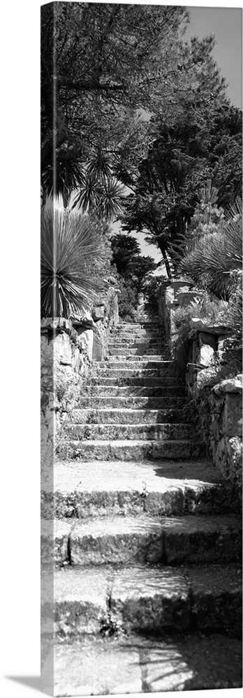 Large Solid-Faced Canvas Print Wall Art Print 16 x 48 entitled Low angle view of steps in a garden, Neptunes Steps, Tresco... Solid-Faced Canvas Print entitled Low angle view of steps in a garden, Neptunes Steps, Tresco Abbey Garden, Tresco, Isles Of Scilly, England.  Multiple sizes available.  Primary colors within this image include Dark Gray, Silver.  Made in the USA.  All products come with a 365 day workmanship guarantee.  Inks used are latex-based and designed to last.  Featuring a proprietary design, our canvases produce the tightest corners without any bubbles, ripples, or bumps and will not warp or sag over time.  Archival inks prevent fading and preserve as much fine detail as possible with no over-saturation or color shifting.