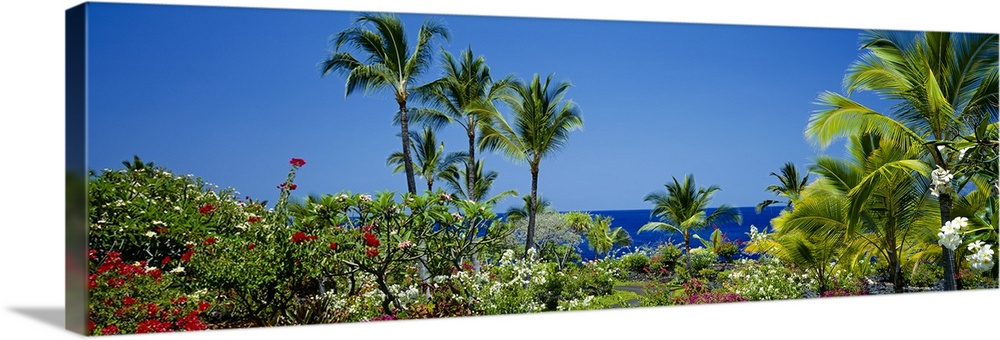 Large Solid-Faced Canvas Print Wall Art Print 48 x 16 entitled Palm trees in a garden, Tropical Garden, Kona, Hawaii Solid-Faced Canvas Print entitled Palm trees in a garden, Tropical Garden, Kona, Hawaii.  Multiple sizes available.  Primary colors within this image include Dark Yellow, Silver, Dark Forest Green, Dark Navy Blue.  Made in USA.  Satisfaction guaranteed.  Archival-quality UV-resistant inks.  Canvas depth is 1.25 and includes a finished backing with pre-installed hanging hardware.  Canvas is handcrafted and made-to-order in the United States using high quality artist-grade canvas.