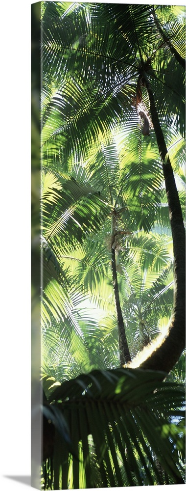 Large Solid-Faced Canvas Print Wall Art Print 16 x 48 entitled Palm Trees Tropical Botanical Gardens HI Solid-Faced Canvas Print entitled Palm Trees Tropical Botanical Gardens HI.  Multiple sizes available.  Primary colors within this image include Forest Green, Light Yellow, White, Dark Forest Green.  Made in the USA.  All products come with a 365 day workmanship guarantee.  Inks used are latex-based and designed to last.  Featuring a proprietary design, our canvases produce the tightest corners without any bubbles, ripples, or bumps and will not warp or sag over time.  Canvas depth is 1.25 and includes a finished backing with pre-installed hanging hardware.