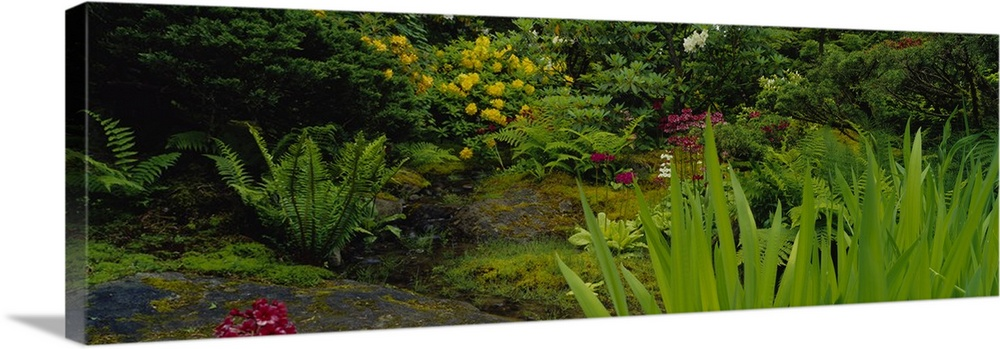 Large Solid-Faced Canvas Print Wall Art Print 48 x 16 entitled Plants and flowers in a garden, Japanese Garden, Seattle, W... Solid-Faced Canvas Print entitled Plants and flowers in a garden, Japanese Garden, Seattle, Washington State.  Multiple sizes available.  Primary colors within this image include Dark Red, Dark Yellow, Black.  Made in USA.  All products come with a 365 day workmanship guarantee.  Inks used are latex-based and designed to last.  Featuring a proprietary design, our canvases produce the tightest corners without any bubbles, ripples, or bumps and will not warp or sag over time.  Canvas depth is 1.25 and includes a finished backing with pre-installed hanging hardware.