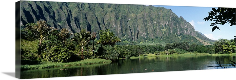 Large Solid-Faced Canvas Print Wall Art Print 48 x 16 entitled Pond in a garden, Hoomaluhia Botanical Garden, Kaneohe, Oah... Solid-Faced Canvas Print entitled Pond in a garden, Hoomaluhia Botanical Garden, Kaneohe, Oahu, Hawaii.  Mountains overlooking ducks in a lagoon at the Hoomaluhia Botanical Garden in Kaneohe, Hawaii.  Multiple sizes available.  Primary colors within this image include Light Green, Black, Gray, Pale Blue.  Made in USA.  All products come with a 365 day workmanship guarantee.  Inks used are latex-based and designed to last.  Canvas is handcrafted and made-to-order in the United States using high quality artist-grade canvas.  Canvas depth is 1.25 and includes a finished backing with pre-installed hanging hardware.