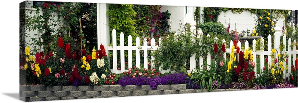 Large Solid-Faced Canvas Print Wall Art Print 48 x 16 entitled Residential Garden La Jolla CA Solid-Faced Canvas Print entitled Residential Garden La Jolla CA.  Multiple sizes available.  Primary colors within this image include Plum, Light Yellow, White, Dark Forest Green.  Made in USA.  All products come with a 365 day workmanship guarantee.  Archival-quality UV-resistant inks.  Featuring a proprietary design, our canvases produce the tightest corners without any bubbles, ripples, or bumps and will not warp or sag over time.  Archival inks prevent fading and preserve as much fine detail as possible with no over-saturation or color shifting.