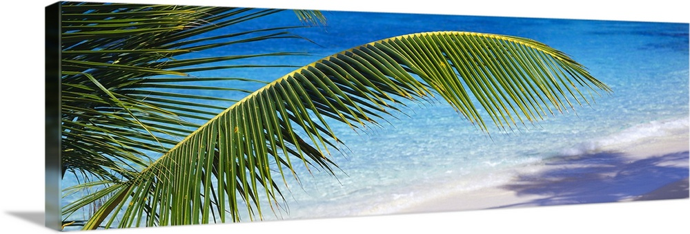 Large Solid-Faced Canvas Print Wall Art Print 48 x 16 entitled Salomon Beach Virgin Islands National Park St. John US Virg... Solid-Faced Canvas Print entitled Salomon Beach Virgin Islands National Park St. John US Virgin Islands.  Relaxing panoramic photo of the picturesque Salomon Beach in the Virgin Islands National Park in St. John in the US Virgin Islands. Lush palm fronds create a shadow on the white sand beach with the transparent, crisp, refreshing water in the background.  Multiple sizes available.  Primary colors within this image include Dark Yellow, White, Dark Forest Green, Royal Blue.  Made in USA.  Satisfaction guaranteed.  Inks used are latex-based and designed to last.  Archival inks prevent fading and preserve as much fine detail as possible with no over-saturation or color shifting.  Featuring a proprietary design, our canvases produce the tightest corners without any bubbles, ripples, or bumps and will not warp or sag over time.
