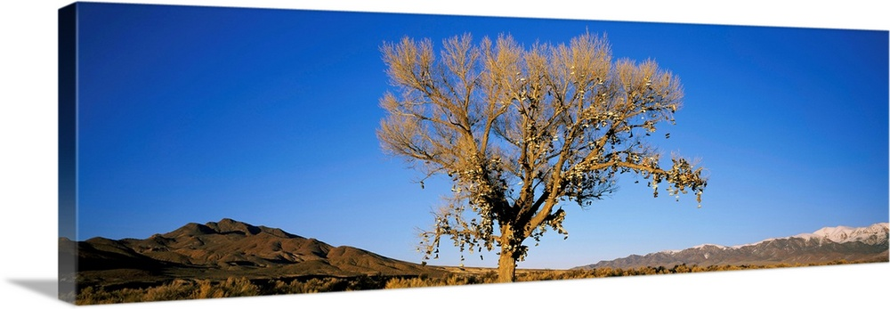 Large Gallery-Wrapped Canvas Wall Art Print 30 x 10 entitled Shoe Tree NV Gallery-Wrapped Canvas entitled Shoe Tree NV.  Multiple sizes available.  Primary colors within this image include Black, White, Pale Blue, Royal Blue.  Made in the USA.  All products come with a 365 day workmanship guarantee.  Inks used are latex-based and designed to last.  Canvas is designed to prevent fading.  Canvases have a UVB protection built in to protect against fading and moisture and are designed to last for over 100 years.
