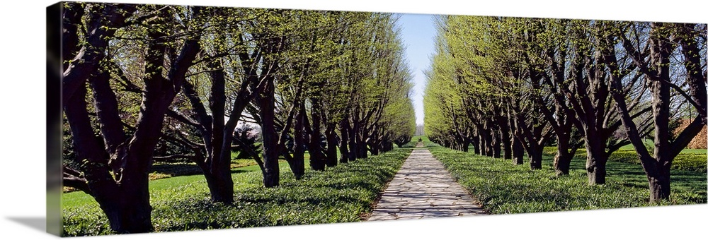 Large Solid-Faced Canvas Print Wall Art Print 48 x 16 entitled Trees along a walkway in a botanical garden, Niagara Falls,... Solid-Faced Canvas Print entitled Trees along a walkway in a botanical garden, Niagara Falls, Ontario, Canada.  Panoramic photograph on a large wall hanging of a narrow footpath between two rows of trees in a garden, in Ontario, Canada.  Multiple sizes available.  Primary colors within this image include Dark Yellow, Black, Dark Forest Green, Pale Blue.  Made in USA.  All products come with a 365 day workmanship guarantee.  Archival-quality UV-resistant inks.  Archival inks prevent fading and preserve as much fine detail as possible with no over-saturation or color shifting.  Canvas is handcrafted and made-to-order in the United States using high quality artist-grade canvas.