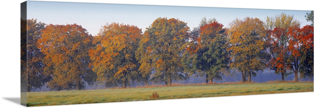 Large Solid-Faced Canvas Print Wall Art Print 48 x 16 entitled Trees in a garden, South Bohemia, Czech Republic Solid-Faced Canvas Print entitled Trees in a garden, South Bohemia, Czech Republic.  Multiple sizes available.  Primary colors within this image include Brown, Peach, Gray, Pale Blue.  Made in USA.  Satisfaction guaranteed.  Archival-quality UV-resistant inks.  Archival inks prevent fading and preserve as much fine detail as possible with no over-saturation or color shifting.  Featuring a proprietary design, our canvases produce the tightest corners without any bubbles, ripples, or bumps and will not warp or sag over time.