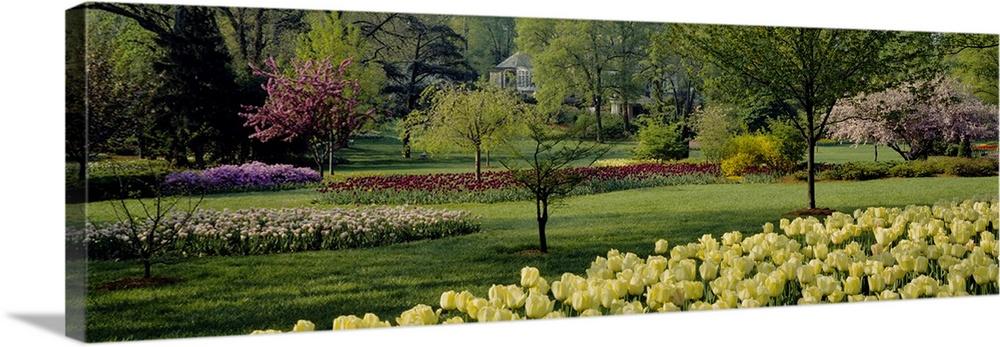 Large Solid-Faced Canvas Print Wall Art Print 48 x 16 entitled Tulip flowers in a garden, Sherwood Gardens, Baltimore, Mar... Solid-Faced Canvas Print entitled Tulip flowers in a garden, Sherwood Gardens, Baltimore, Maryland.  Multiple sizes available.  Primary colors within this image include Dark Yellow, Black, Gray, Light Gray.  Made in USA.  All products come with a 365 day workmanship guarantee.  Inks used are latex-based and designed to last.  Featuring a proprietary design, our canvases produce the tightest corners without any bubbles, ripples, or bumps and will not warp or sag over time.  Canvas depth is 1.25 and includes a finished backing with pre-installed hanging hardware.