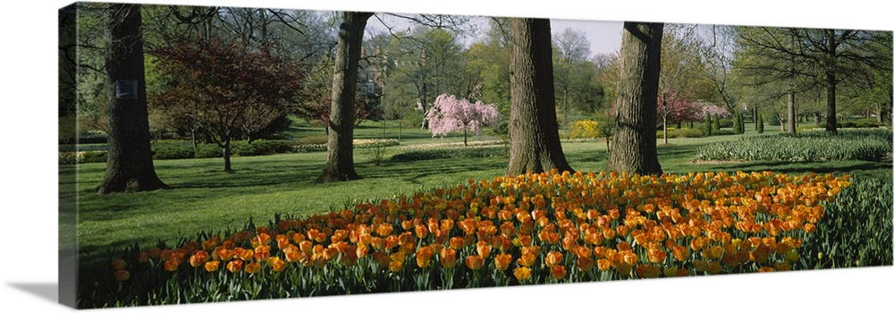 Large Solid-Faced Canvas Print Wall Art Print 48 x 16 entitled Tulip flowers in a garden, Sherwood Gardens, Baltimore, Mar... Solid-Faced Canvas Print entitled Tulip flowers in a garden, Sherwood Gardens, Baltimore, Maryland.  Multiple sizes available.  Primary colors within this image include Dark Red, Forest Green, Peach, Black.  Made in the USA.  Satisfaction guaranteed.  Inks used are latex-based and designed to last.  Archival inks prevent fading and preserve as much fine detail as possible with no over-saturation or color shifting.  Canvas depth is 1.25 and includes a finished backing with pre-installed hanging hardware.