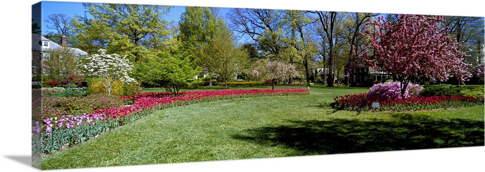 Large Solid-Faced Canvas Print Wall Art Print 48 x 16 entitled Tulips and cherry trees in a garden, Sherwood Gardens, Balt... Solid-Faced Canvas Print entitled Tulips and cherry trees in a garden, Sherwood Gardens, Baltimore, Maryland.  Multiple sizes available.  Primary colors within this image include Forest Green, Plum, Sky Blue, Black.  Made in USA.  Satisfaction guaranteed.  Archival-quality UV-resistant inks.  Canvas depth is 1.25 and includes a finished backing with pre-installed hanging hardware.  Archival inks prevent fading and preserve as much fine detail as possible with no over-saturation or color shifting.