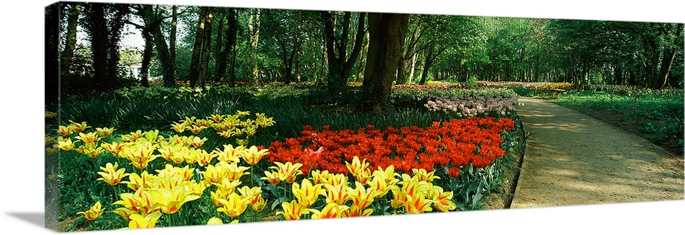 Large Solid-Faced Canvas Print Wall Art Print 48 x 16 entitled Tulips in a garden, Springfields Garden, Lincolnshire, England Solid-Faced Canvas Print entitled Tulips in a garden, Springfields Garden, Lincolnshire, England.  Multiple sizes available.  Primary colors within this image include Red, Yellow, Dark Gray, Dark Forest Green.  Made in USA.  Satisfaction guaranteed.  Archival-quality UV-resistant inks.  Canvas depth is 1.25 and includes a finished backing with pre-installed hanging hardware.  Featuring a proprietary design, our canvases produce the tightest corners without any bubbles, ripples, or bumps and will not warp or sag over time.