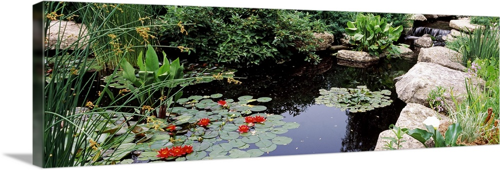 Large Solid-Faced Canvas Print Wall Art Print 48 x 16 entitled Water lilies in a pond, Sunken Garden, Olbrich Botanical Ga... Solid-Faced Canvas Print entitled Water lilies in a pond, Sunken Garden, Olbrich Botanical Gardens, Madison, Wisconsin.  Multiple sizes available.  Primary colors within this image include Dark Red, Dark Yellow, Black, White.  Made in USA.  Satisfaction guaranteed.  Archival-quality UV-resistant inks.  Canvas is handcrafted and made-to-order in the United States using high quality artist-grade canvas.  Canvas depth is 1.25 and includes a finished backing with pre-installed hanging hardware.