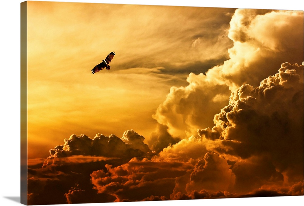 Large Solid-Faced Canvas Print Wall Art Print 36 x 24 entitled Freedom Solid-Faced Canvas Print entitled Freedom.  An eagle flying in the sky over large clouds at sunset.  Multiple sizes available.  Primary colors within this image include Brown, Light Yellow, Dark Forest Green.  Made in the USA.  All products come with a 365 day workmanship guarantee.  Archival-quality UV-resistant inks.  Featuring a proprietary design, our canvases produce the tightest corners without any bubbles, ripples, or bumps and will not warp or sag over time.  Archival inks prevent fading and preserve as much fine detail as possible with no over-saturation or color shifting.