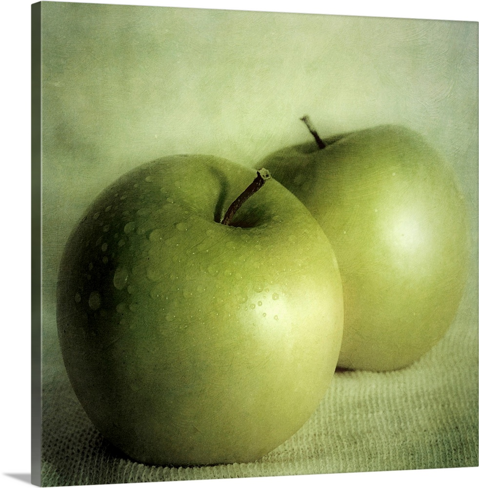 Large Gallery-Wrapped Canvas Wall Art Print 16 x 16 entitled Apple Painting Gallery-Wrapped Canvas entitled Apple Painting.  Square, large wall art of two green apples sitting on a cloth, against a lighter green background.  Multiple sizes available.  Primary colors within this image include Forest Green, Light Green, Black.  Made in USA.  All products come with a 365 day workmanship guarantee.  Inks used are latex-based and designed to last.  Canvases have a UVB protection built in to protect against fading and moisture and are designed to last for over 100 years.  Canvas is designed to prevent fading.
