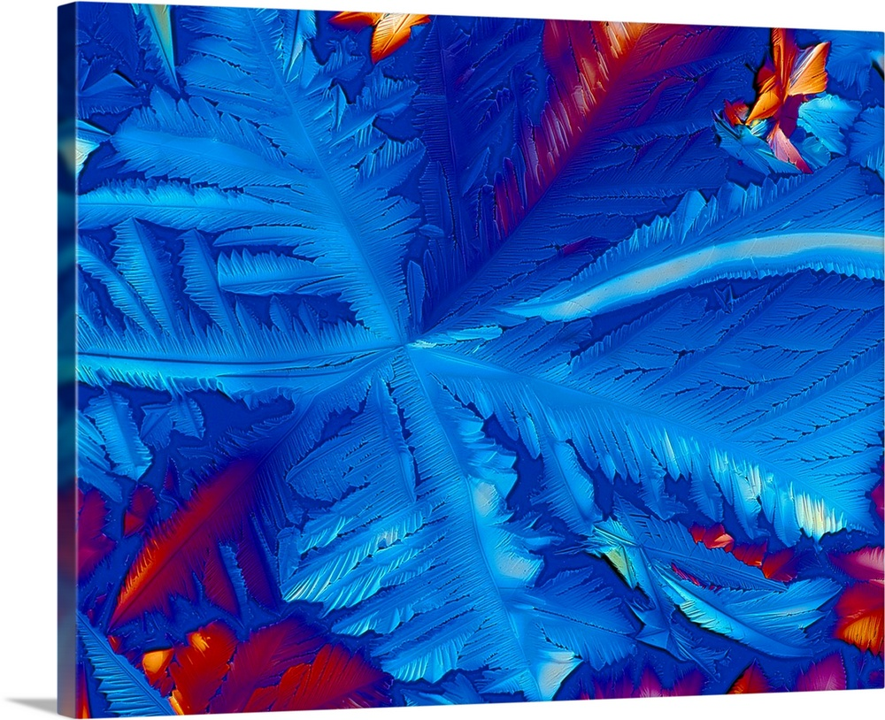 Large Solid-Faced Canvas Print Wall Art Print 30 x 24 entitled Co-enzyme NAD (nicotinamide) crystals Solid-Faced Canvas Print entitled Co-enzyme NAD nicotinamide crystals.  Polarised light micrograph of crystals of the co- enzyme nicotinamide adenine dinucleotide NAD. This is an extremely important and widespread co- enzyme found in nature. Formerly known as diphos- phopyridine nucleotide DPN. NAD functions as a hydrogen transfer agent it carries electrons. The hydrogen transfer is stereospecific both to the particular substrate in question and to this coenzyme. As a derivative of nicotinic acid, NAD is required in many redox reactions, as in the Krebs Cycle and the Electron Transport System in respiration. In this way, the energy carrier ATP is activated which powers most cellular activity. Magnification x45 at 6x7cm size.  Multiple sizes available.  Primary colors within this image include Dark Red, Dark Purple, Royal Blue.  Made in USA.  All products come with a 365 day workmanship guarantee.  Inks used are latex-based and designed to last.  Archival inks prevent fading and preserve as much fine detail as possible with no over-saturation or color shifting.  Canvas depth is 1.25 and includes a finished backing with pre-installed hanging hardware.