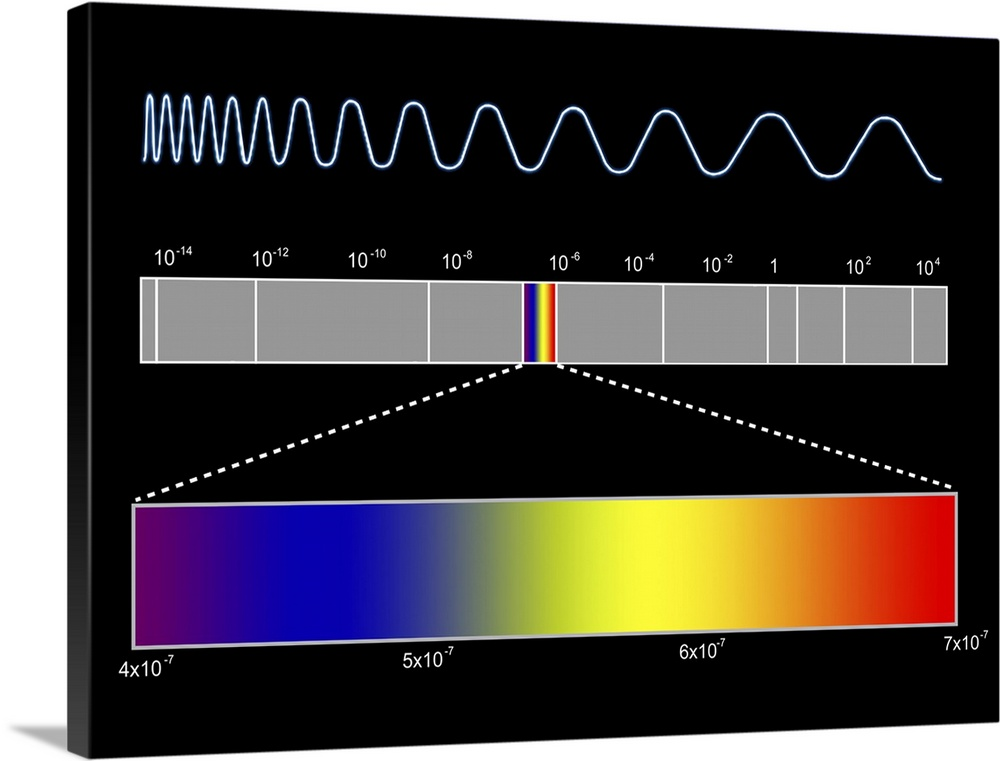 Large Solid-Faced Canvas Print Wall Art Print 40 x 30 entitled Electromagnetic spectrum Solid-Faced Canvas Print entitled Electromagnetic spectrum.  Electromagnetic spectrum. Computer artwork of the electromagnetic EM spectrum across centre and the component colours of visible light across bottom. The changing wavelength of EM radiation through the spectrum is shown by the trace across top. At the high wavelength end of the spectrum are from left to right gamma rays, X-rays and ultraviolet light. In the centre of the EM spectrum are wavelengths that the human eye can see, known as visible light. Visible light comprises light of different wavelengths and energies, and hence colours. At the low wavelength end of the EM spectrum centre to right are infra red radiation, microwaves and radio waves.  Multiple sizes available.  Primary colors within this image include Red, Blue, Dark Purple, White.  Made in the USA.  All products come with a 365 day workmanship guarantee.  Inks used are latex-based and designed to last.  Featuring a proprietary design, our canvases produce the tightest corners without any bubbles, ripples, or bumps and will not warp or sag over time.  Canvas depth is 1.25 and includes a finished backing with pre-installed hanging hardware.