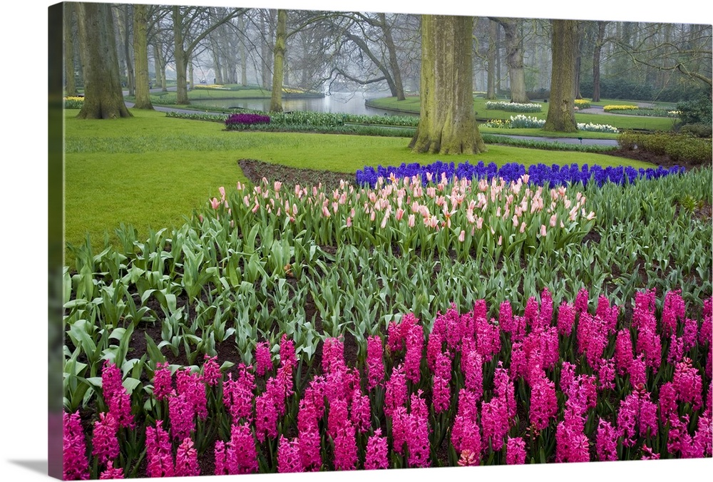 Large Solid-Faced Canvas Print Wall Art Print 30 x 20 entitled Keukenhof Gardens, Amsterdam, Netherlands Solid-Faced Canvas Print entitled Keukenhof Gardens, Amsterdam, Netherlands.  This is a landscape photograph of a garden full of carefully cultivated flowers in meticulously organized flower beds, a small canal, and old trees.  Multiple sizes available.  Primary colors within this image include Plum, Light Purple, Black, White.  Made in USA.  Satisfaction guaranteed.  Inks used are latex-based and designed to last.  Canvas depth is 1.25 and includes a finished backing with pre-installed hanging hardware.  Canvas is handcrafted and made-to-order in the United States using high quality artist-grade canvas.