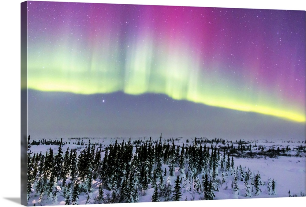 Large Solid-Faced Canvas Print Wall Art Print 30 x 20 entitled Pink aurora over boreal forest in Canada Solid-Faced Canvas Print entitled Pink aurora over boreal forest in Canada.  February 20, 2015 - Aurora borealis from Churchill, Manitoba, Canada. This is looking north toward a curtain with pink upper coloration from low-energy electrons exciting oxygen in the high atmosphere.  Multiple sizes available.  Primary colors within this image include Dark Purple, Light Yellow, Black, Light Gray.  Made in the USA.  All products come with a 365 day workmanship guarantee.  Inks used are latex-based and designed to last.  Featuring a proprietary design, our canvases produce the tightest corners without any bubbles, ripples, or bumps and will not warp or sag over time.  Canvas is handcrafted and made-to-order in the United States using high quality artist-grade canvas.
