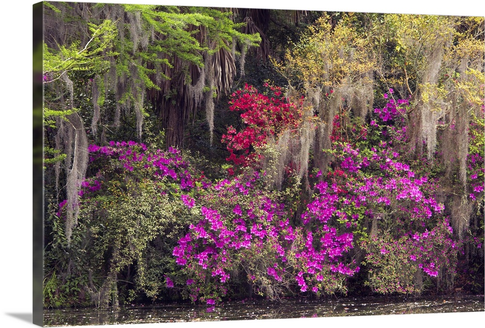 Solid-Faced Canvas Print Wall Art entitled Spring Coloree