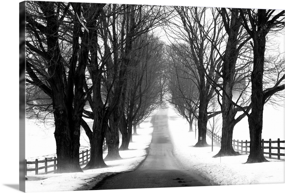 Solid-Faced Canvas Print Wall Art entitled Winter Tree Lane