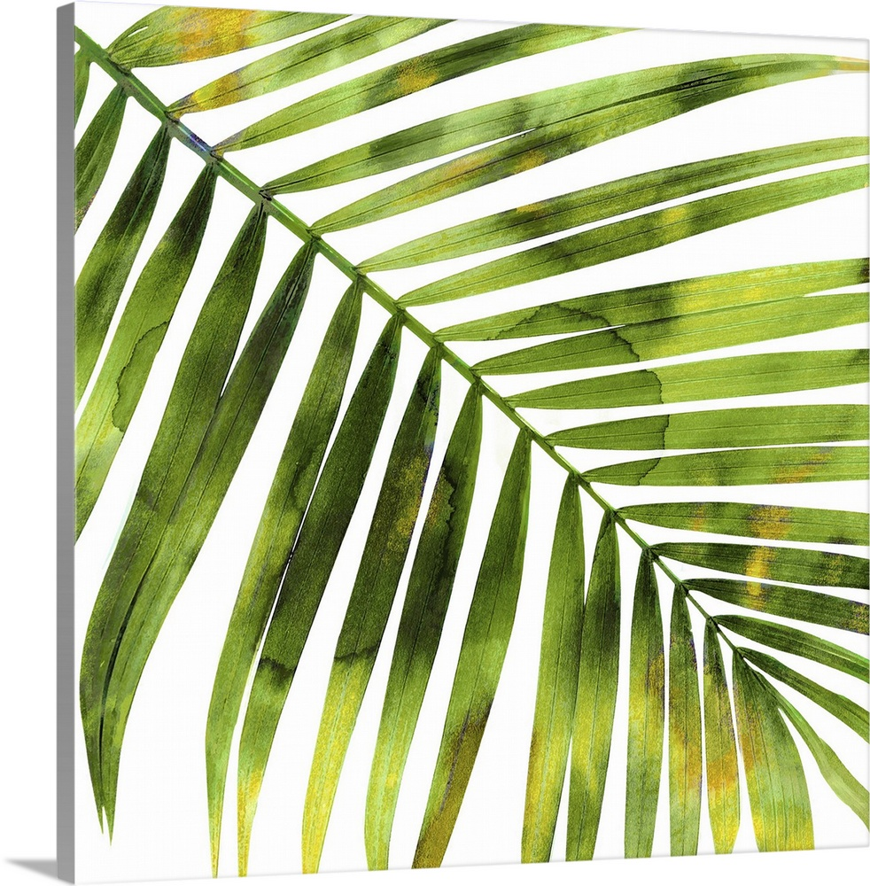 Solid-Faced Canvas drucken wand kunst entitled Tropical Palm I
