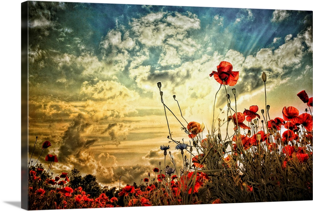 Large Solid-Faced Canvas Print Wall Art Print 30 x 20 entitled A Moment in Time Solid-Faced Canvas Print entitled A Moment in Time.  Photograph of a poppy field under a cloudy sky.  Multiple sizes available.  Primary colors within this image include Dark Red, Peach, Black, Silver.  Made in the USA.  Satisfaction guaranteed.  Inks used are latex-based and designed to last.  Canvas is handcrafted and made-to-order in the United States using high quality artist-grade canvas.  Canvas depth is 1.25 and includes a finished backing with pre-installed hanging hardware.