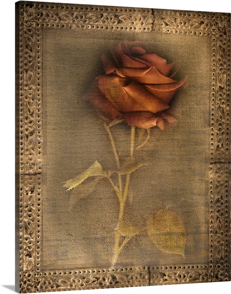 Large Solid-Faced Canvas Print Wall Art Print 24 x 30 entitled Lost Love Solid-Faced Canvas Print entitled Lost Love.  Botanicals Still Life.  Multiple sizes available.  Primary colors within this image include Peach, Black, Gray.  Made in USA.  All products come with a 365 day workmanship guarantee.  Inks used are latex-based and designed to last.  Featuring a proprietary design, our canvases produce the tightest corners without any bubbles, ripples, or bumps and will not warp or sag over time.  Canvas is handcrafted and made-to-order in the United States using high quality artist-grade canvas.