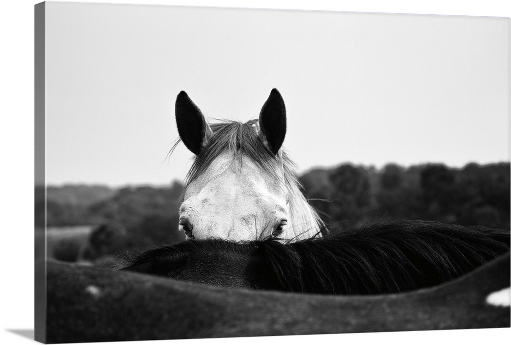 Large Solid-Faced Canvas Print Wall Art Print 30 x 20 entitled Flirt Solid-Faced Canvas Print entitled Flirt.  Photograph of a coy horse looking at the camera from behind another horse.  Multiple sizes available.  Primary colors within this image include Dark Gray, White.  Made in USA.  All products come with a 365 day workmanship guarantee.  Inks used are latex-based and designed to last.  Featuring a proprietary design, our canvases produce the tightest corners without any bubbles, ripples, or bumps and will not warp or sag over time.  Archival inks prevent fading and preserve as much fine detail as possible with no over-saturation or color shifting.