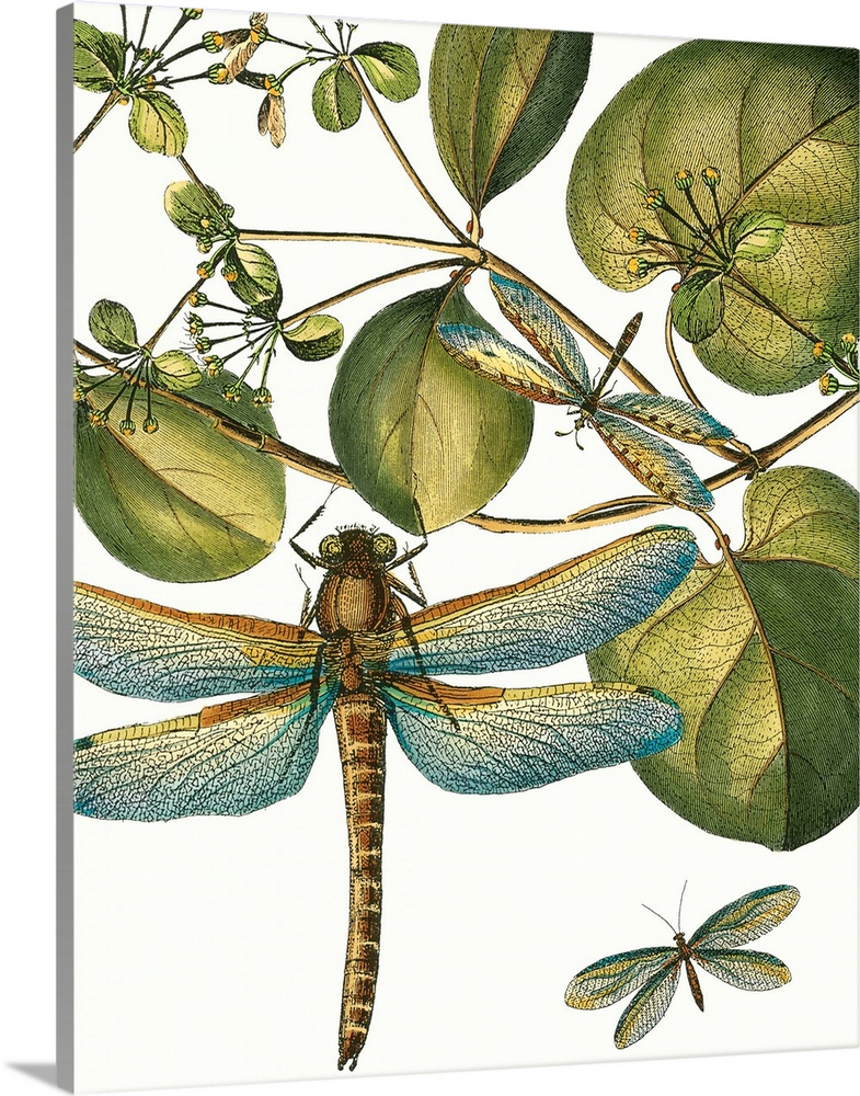 Solid-Faced Canvas Print Wall Art entitled Dragonfly Medley In