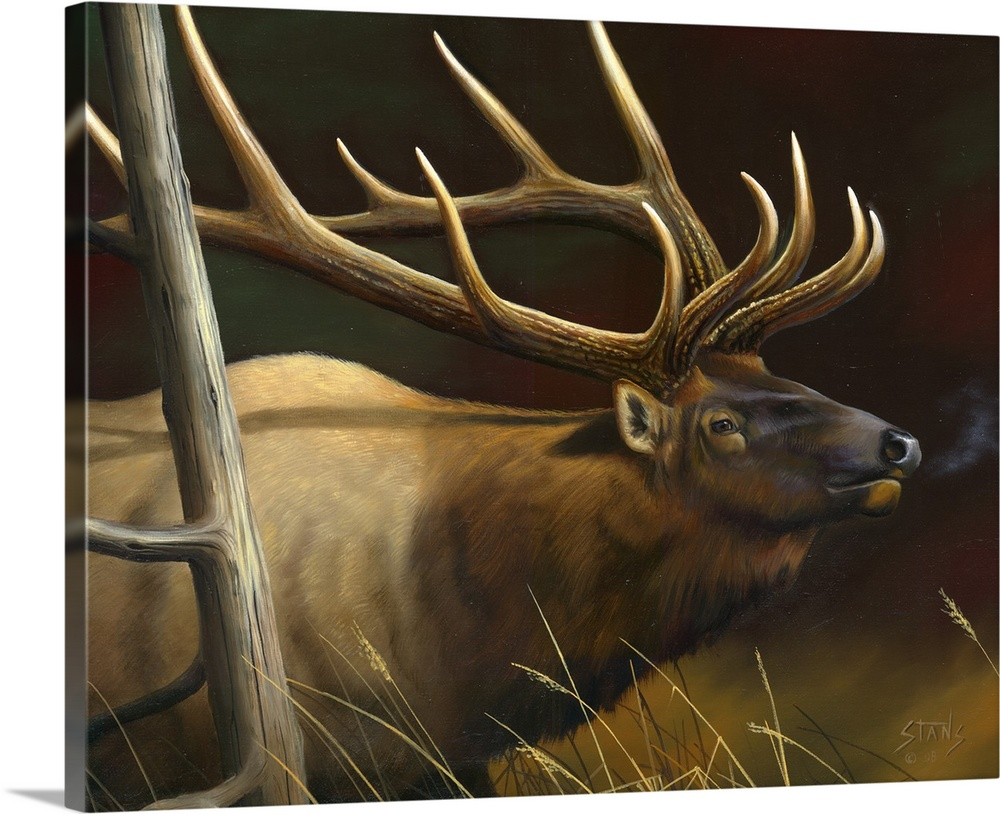 Solid-Faced Canvas Print Wall Art entitled Elk Portrait II