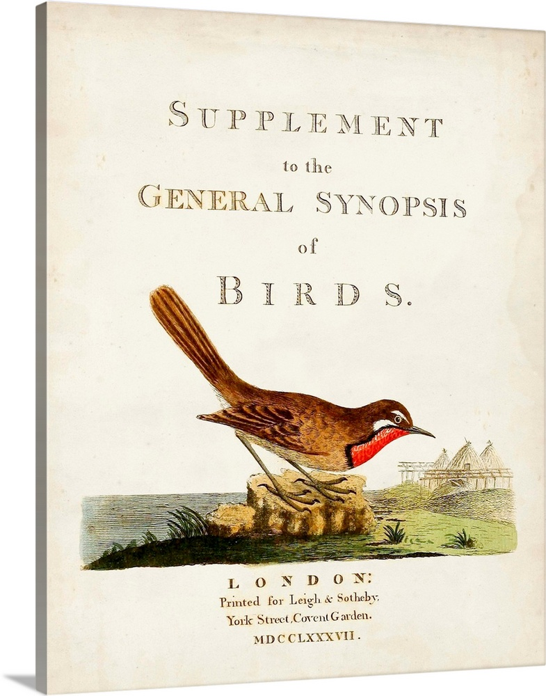 Large Solid-Faced Canvas Print Wall Art Print 24 x 30 entitled General Synopsis of Birds Solid-Faced Canvas Print entitled General Synopsis of Birds.  Illustrated book cover of Supplement to the General Synopsis of Birds..  Multiple sizes available.  Primary colors within this image include Brown, Pink, Black, White.  Made in USA.  All products come with a 365 day workmanship guarantee.  Inks used are latex-based and designed to last.  Archival inks prevent fading and preserve as much fine detail as possible with no over-saturation or color shifting.  Canvas is handcrafted and made-to-order in the United States using high quality artist-grade canvas.