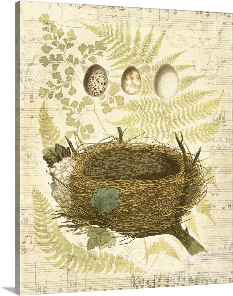 Solid-Faced Canvas Print Wall Art entitled Melodic Nest and Eggs II