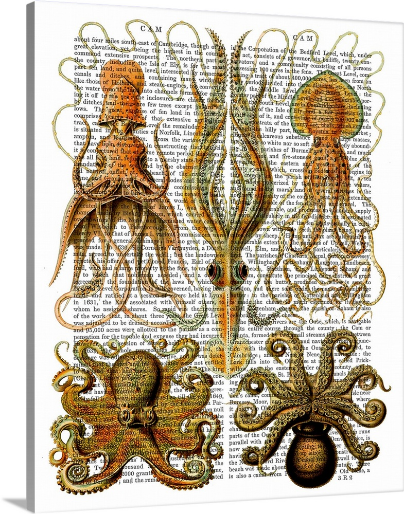 Solid-Faced Canvas Print Wall Art entitled Octopus and Squid